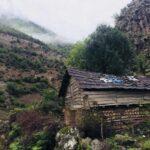 اختصاصی: جنگلهای زیبای اسالم به خلخال + تصاویر
